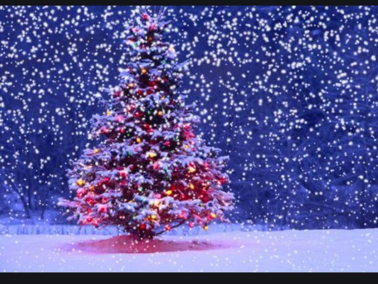 Christmas Tree Shop Online